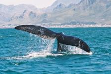 Whale_festival10