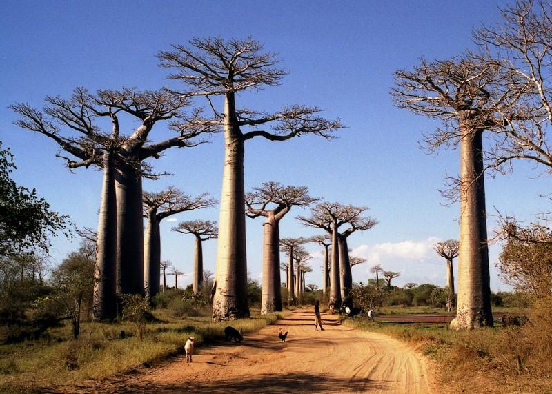 baobab216b