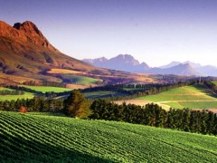 best-things-to-do-in-cape-town-stellenbosch