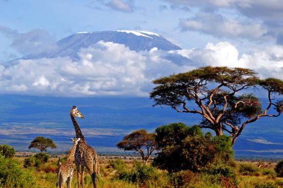 kilimanjaro, serengi
