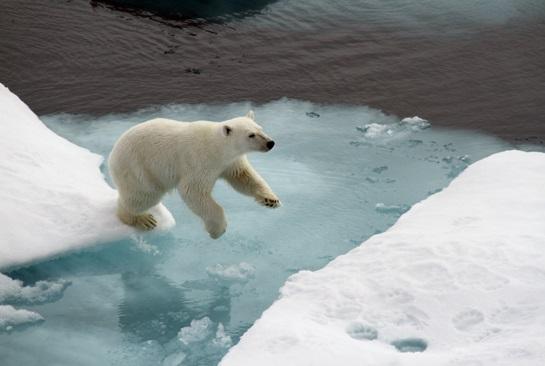 polar bear flightsite